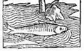 2016-10-17_58052223cbf14_fishforEHPC