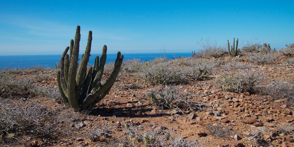baja-desert-coast