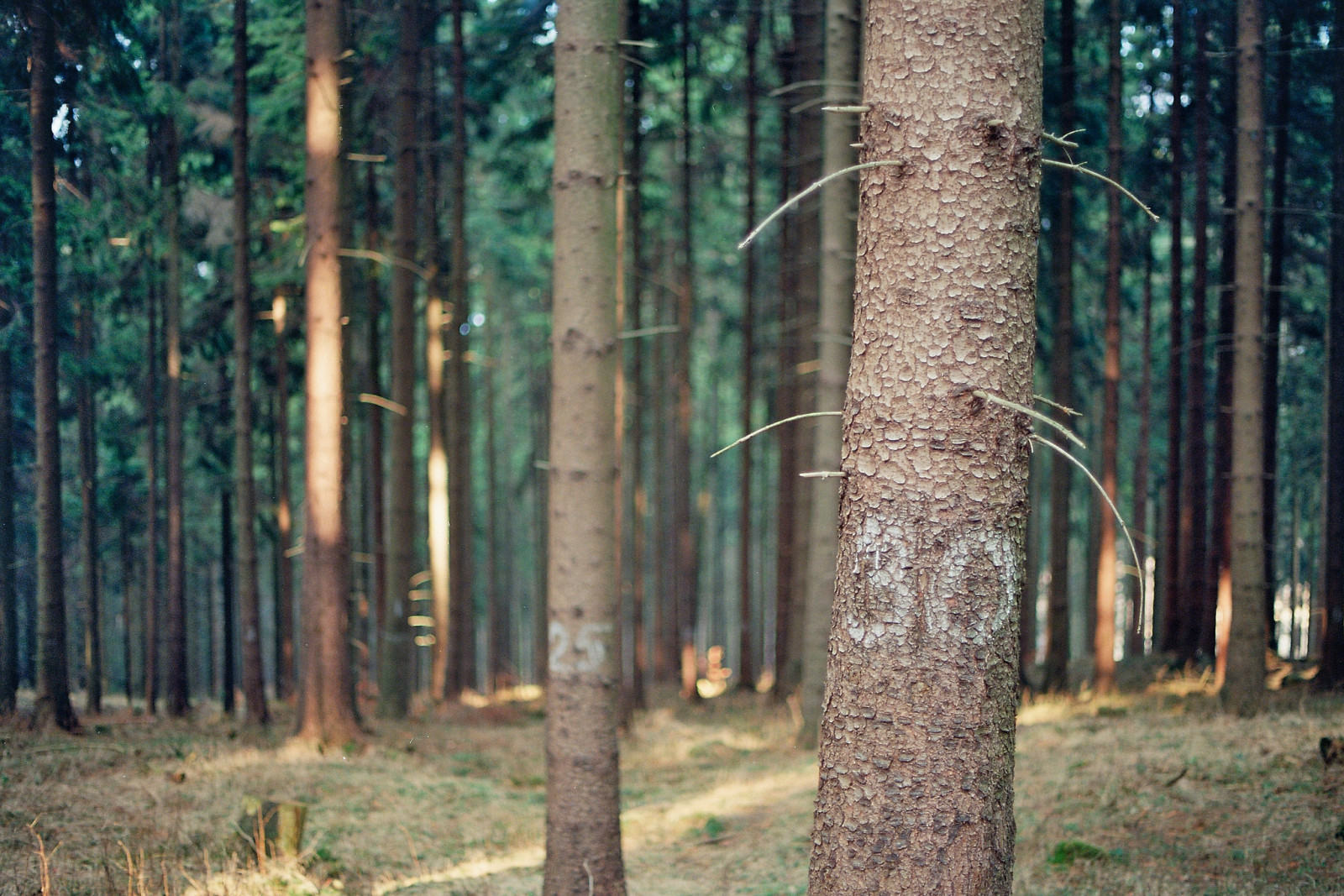 Numbers on trees by Masine