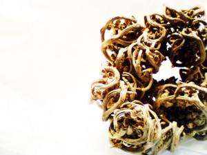 Rose of Jericho by hira zubairi