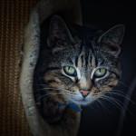cat by doripili